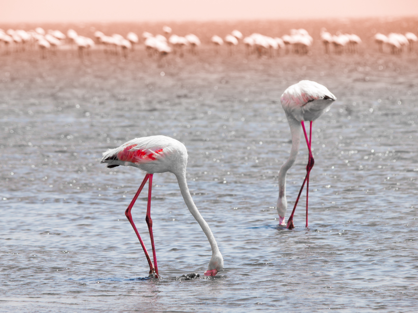 walvis_bay_flamingos_100615763_Subscription_Monthly_M.jpg